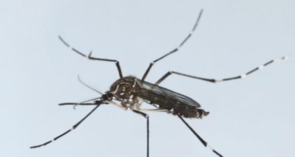 Photo of Casanare sigue presentando un alto número de casos de Dengue, Zika y Chikungunya