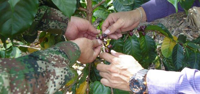 Photo of A Casanare llegará Pelotón de soldados de Desarrollo Rural