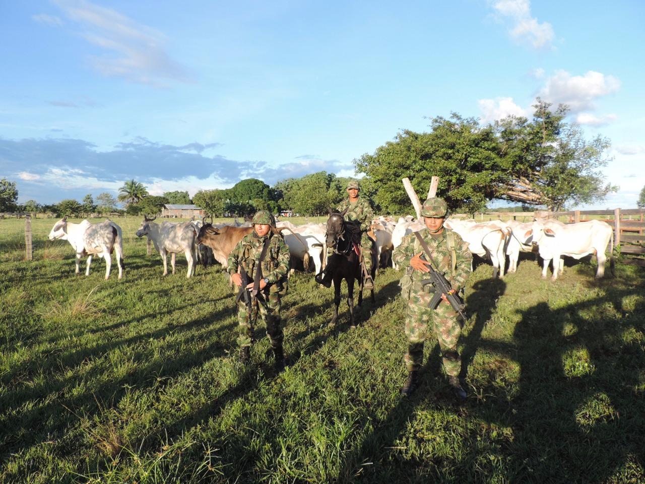 Photo of Ejército Nacional recupera ganado hurtado en el Vichada