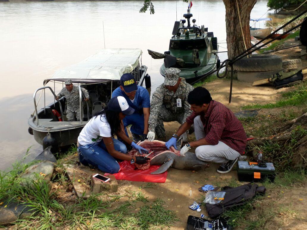 Photo of Corporinoquia investiga la muerte de un delfín rosado que apareció cerca al río Arauca