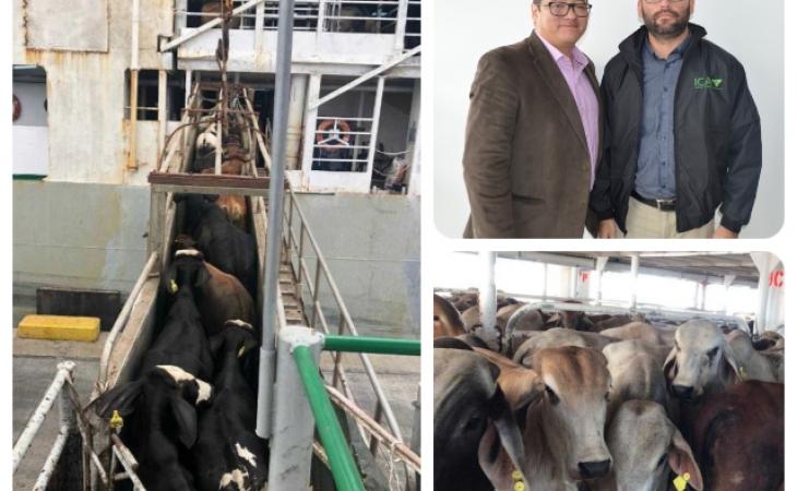 Photo of 8.250 bovinos, exportados a Irak y el Líbano