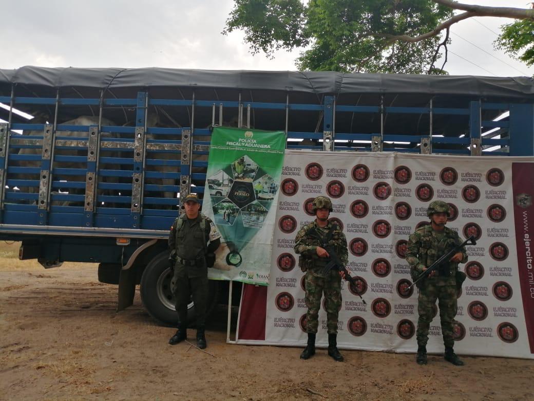 Photo of 274 reses fueron recuperadas por el Ejército Nacional en Arauca