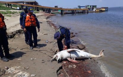 Armada de Colombia halla cuerpo sin vida de Delfín rosado en la Orinoquía Colombiana