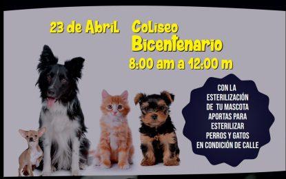 Jornada de esterilización de perros y gatos en coliseo El Bicentenario en Yopal