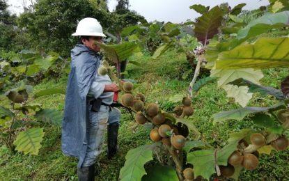 Chámeza: Ejemplo de productividad agrícola para Casanare