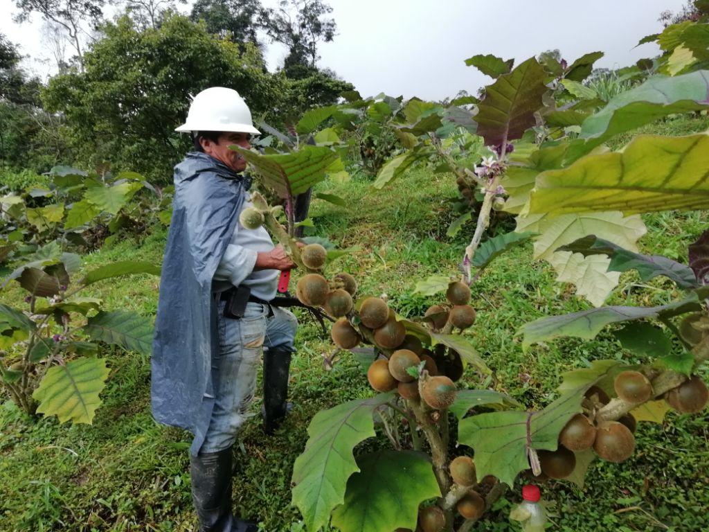 Photo of Chámeza: Ejemplo de productividad agrícola para Casanare