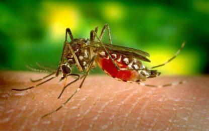 Se reportan 89.781 casos de dengue en el país en lo que va del año