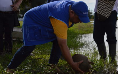 Liberación de fauna silvestre en Casanare