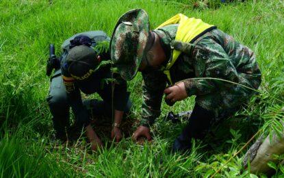 Ejército Nacional conmemoró el día Mundial del Medio Ambiente con la siembra de mil especies nativas