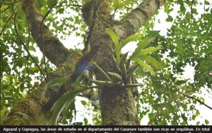 A través de libros, Ecopetrol y la UPTC muestran hallazgos de biodiversidad en cinco zonas del país