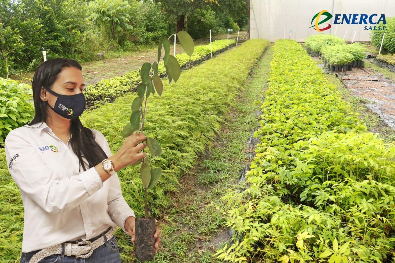 Photo of Enerca entregó plántulas a Corporinoquia dentro de la figura de compensaciones ambientales
