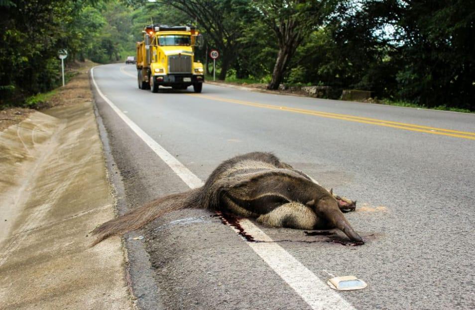 Photo of Alrededor de 90.000 especies de fauna silvestre están siendo atropelladas en vías de Casanare