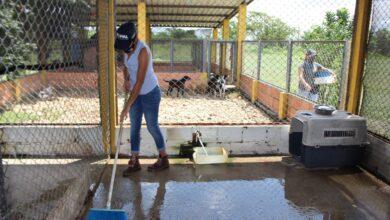 Photo of Administración municipal realizó jornada de embellecimiento en instalaciones del albergue para animales domésticos