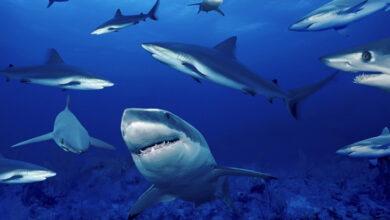 Photo of Colombia prohíbe la pesca artesanal e industrial de tiburón