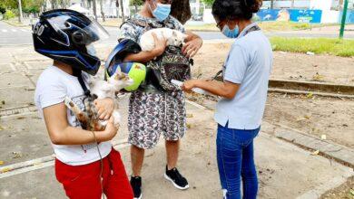 Photo of Segunda jornada de Vacunación antirrábica para perros y gatos, se llevó a cabo en 11 corregimientos de Yopal