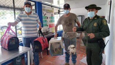 Photo of 34 felinos hicieron parte de la jornada de esterilización y castración en el asentamiento Mi Nueva Esperanza