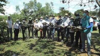 Photo of 38 animales silvestres fueron regresados a su habitad natural gracias a Cormacarena y Corpochivor