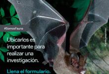 Photo of Inicia investigación sobre murciélagos en Villavicencio