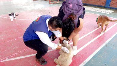 Photo of 83 animales hicieron parte de la jornada Antirrábica en El Portal y Villa Lucia