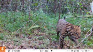 Con cámaras ocultas Humboldt y Ecopetrol monitoreanespecies en Magdalena Medio y Orinoquia - Noticias de Colombia