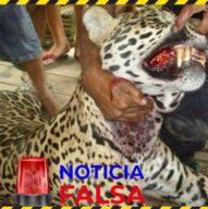 Corporinoquia desmiente información sobre ataque de jaguar en Orocué - Noticias de Colombia