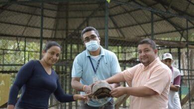 Photo of Animales silvestres fueron liberados en zona rural de Yopal